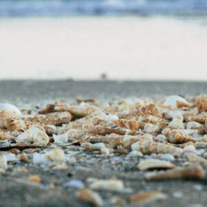 pebble-to-sand-meditation-music