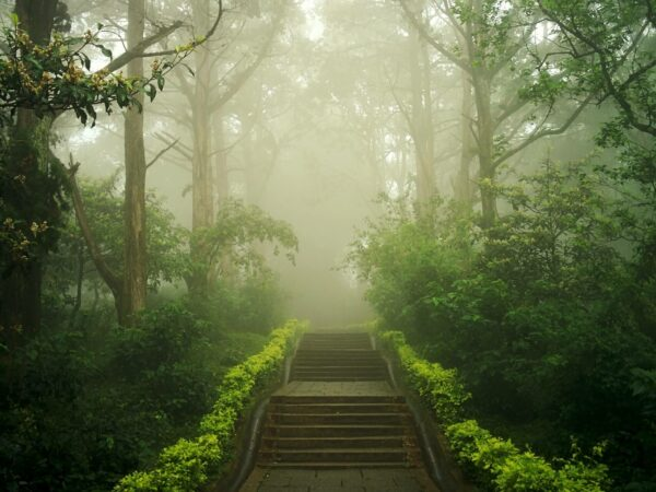 from-mist-to-mystic-meditation-music